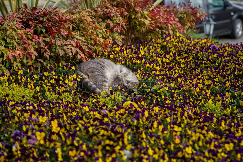 Cat plays and hunts in flowers.  royalty free stock image