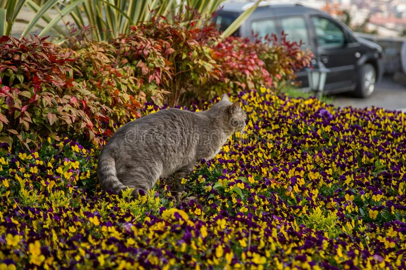 Cat plays and hunts in flowers.  stock photo