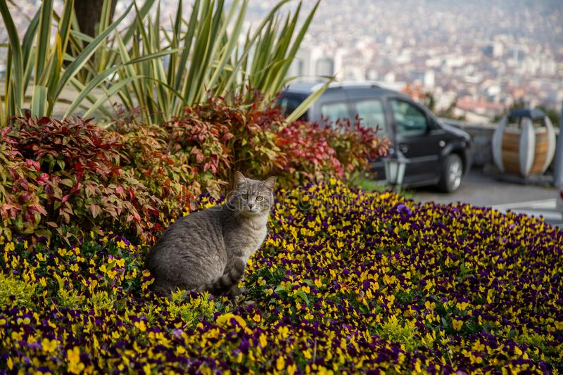 Cat plays and hunts in flowers.  royalty free stock photos