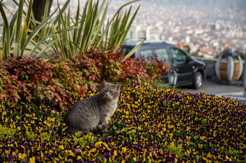 Cat plays and hunts in flowers.  stock image