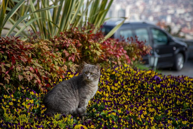Cat plays and hunts in flowers.  stock photos