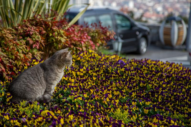 Cat plays and hunts in flowers.  royalty free stock photo