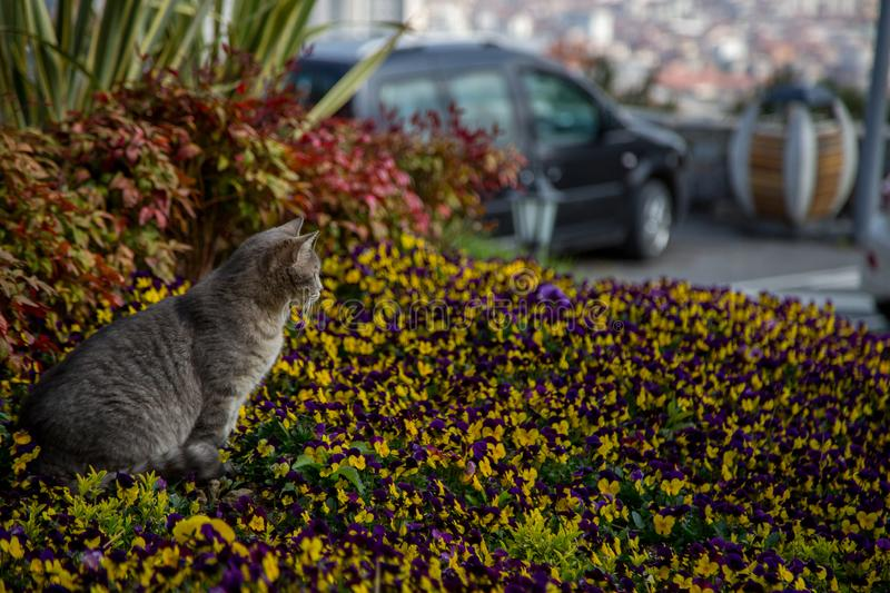 Cat plays and hunts in flowers.  stock images