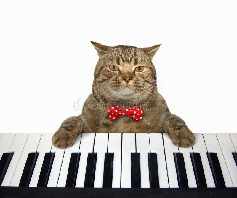 Cat plays the piano 2. The cute cat in a red bow tie plays the piano. White background stock photo
