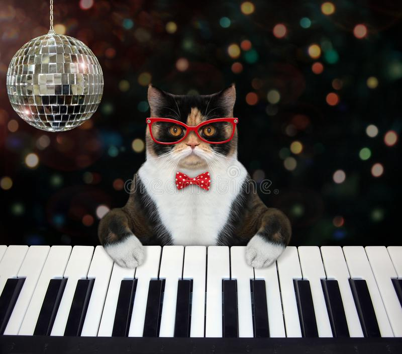 Cat plays piano keyboard at club royalty free stock photography