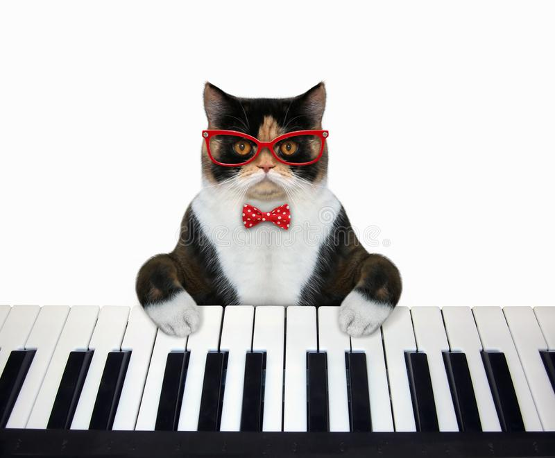 Cat plays piano keyboard stock images