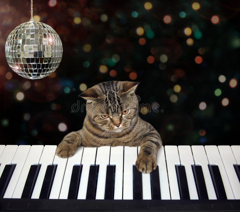 Cat plays the piano in a nightclub stock photo