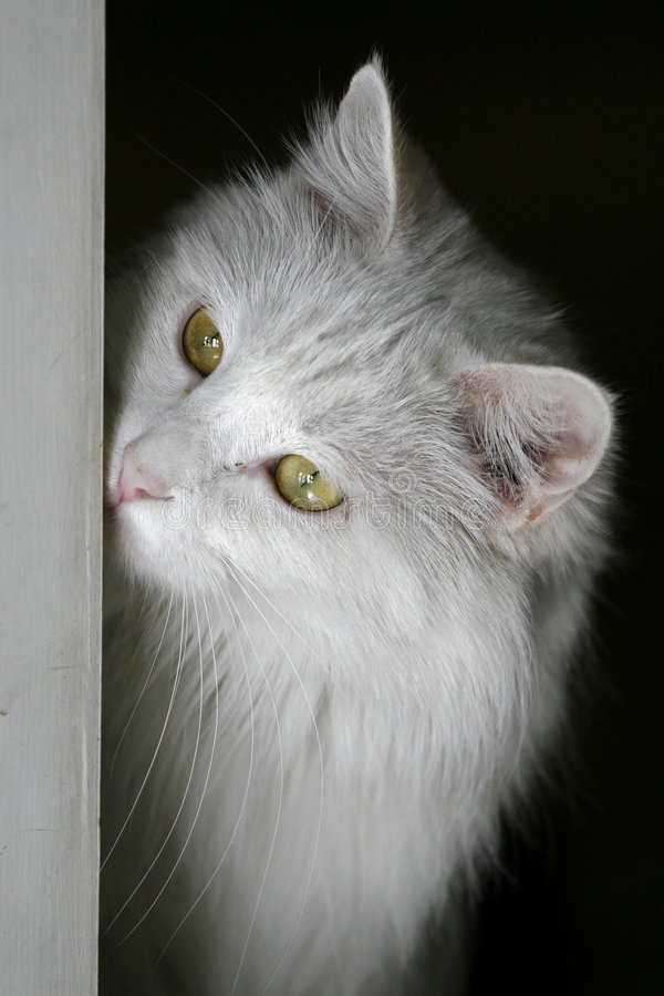 Cat while pondering. royalty free stock images