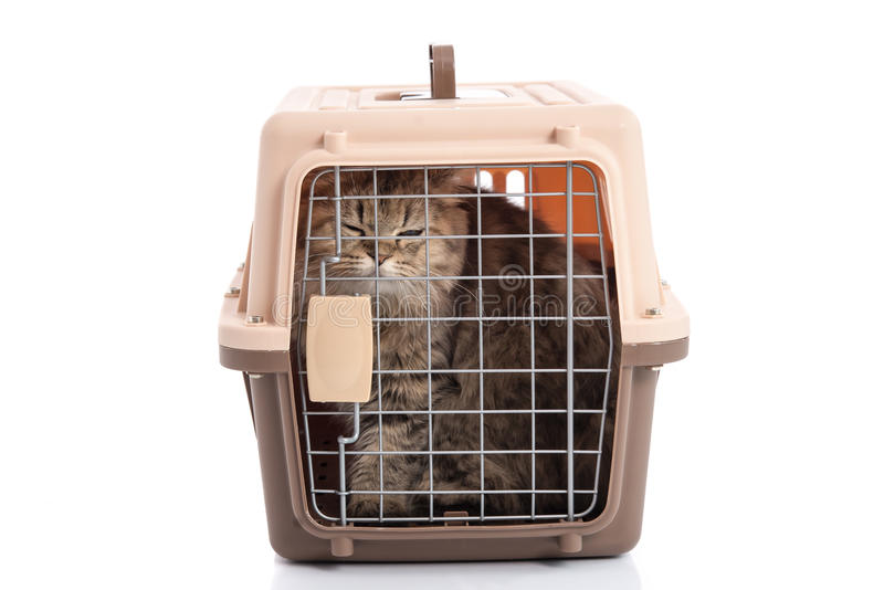 Cat ponibcctyc vk pet carrier isolated on white background royalty free stock photos