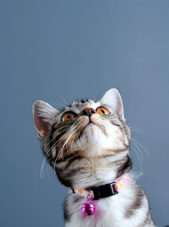 Download Cat portrait stock image. Image of space, studio, curiosity - 12598219