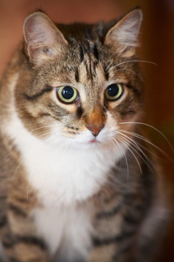 Cat portrait. stock image