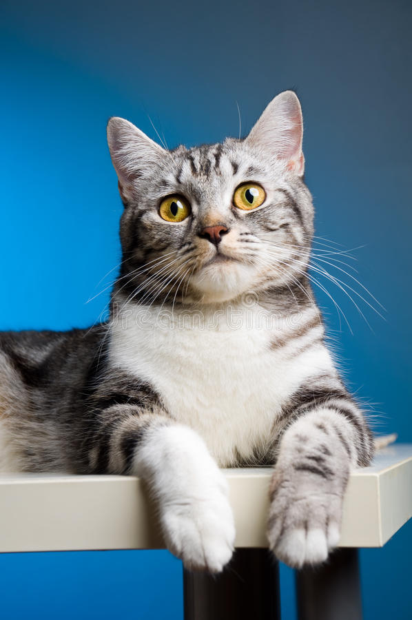 Download Cat portrait stock image. Image of posing, kitten, playful - 15586237