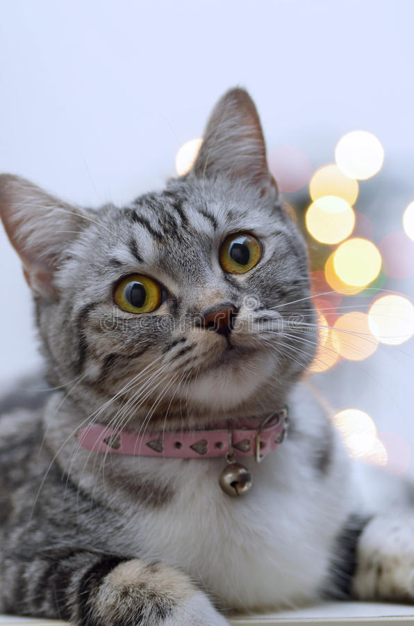 Download Cat portrait stock image. Image of cute, playful, looking - 17377527