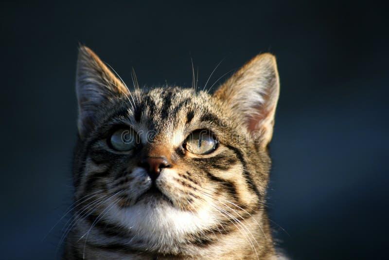Download Cat Portrait stock image. Image of head, coat, inquisitive - 18022747