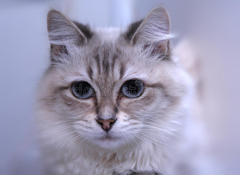 Cat portrait. Macro. Blurs background stock photos