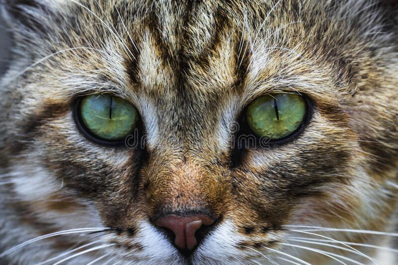 A cat portrait. cat face close up in the street.. cat`s nose and eyes, macro view. Curious animal portrait close stock photos