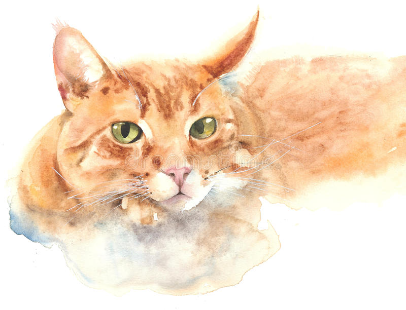 Cat portrait cat resting ginger color watercolor painting illustration isolated on white background vector illustration