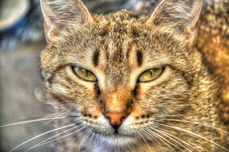Cat portrait royalty free stock photos