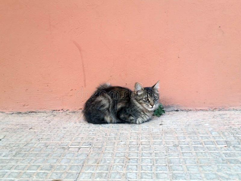 Cat Portrait, Grijs en Roze royalty-vrije stock afbeeldingen