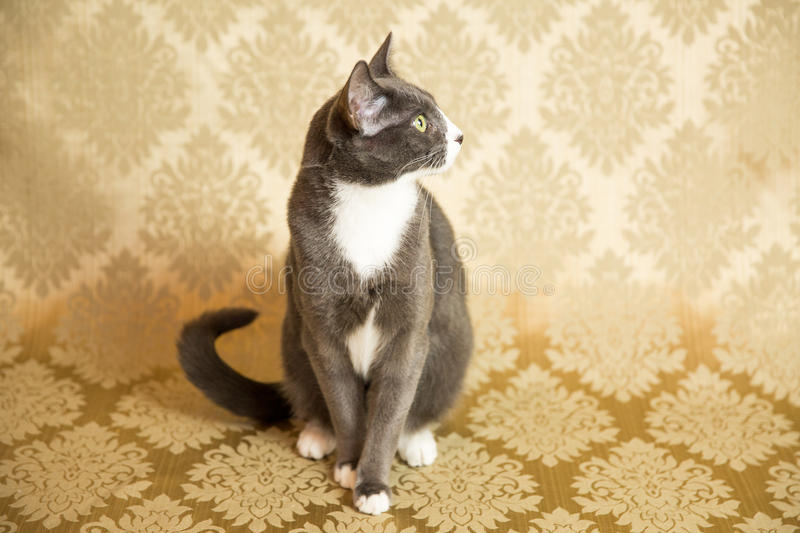 Cat Portrait. Photograph of a cat in an animal rescue shelter royalty free stock photo