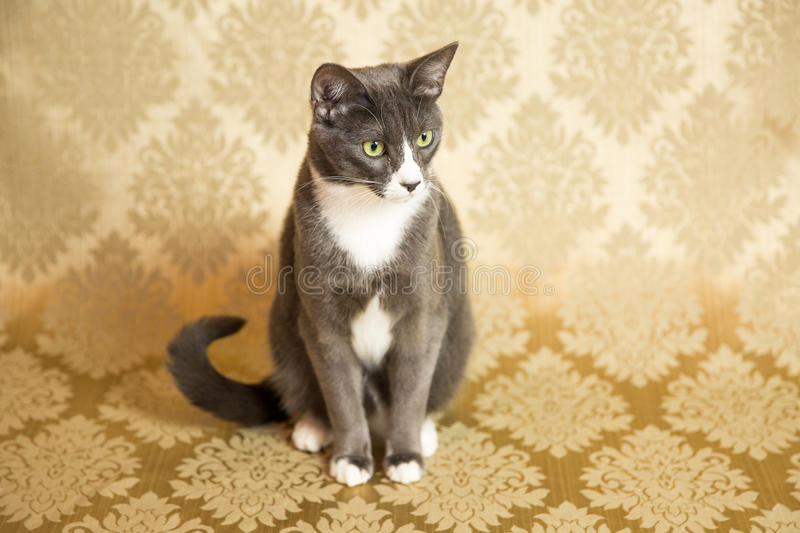 Cat Portrait. Photograph of a cat in an animal rescue shelter stock images