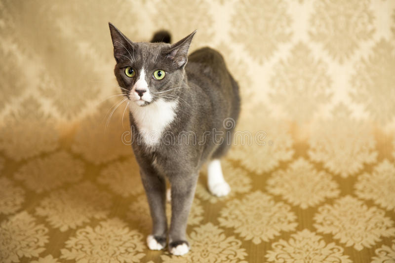 Cat Portrait. Photograph of a cat in an animal rescue shelter stock image
