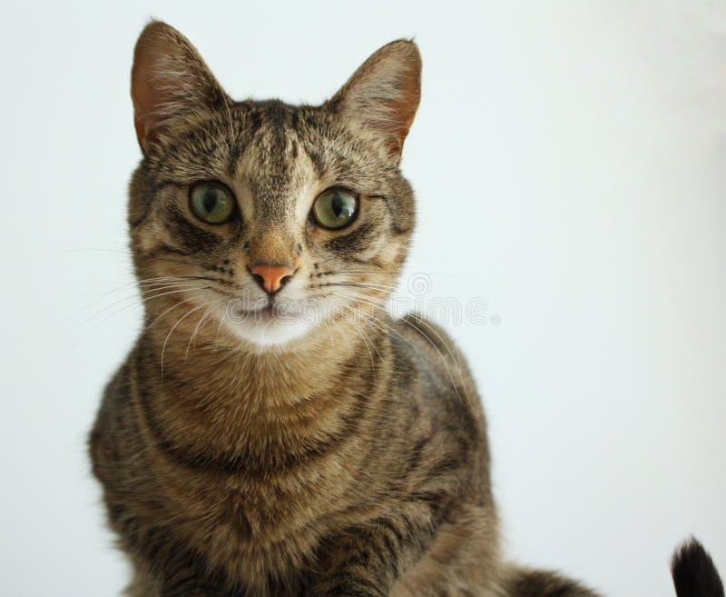 Cat Portrait Shot royaltyfria bilder