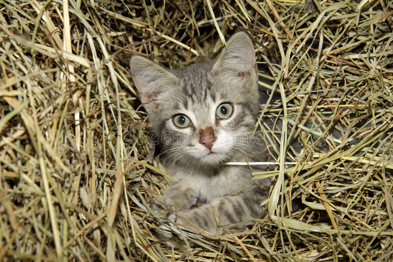 Download Cat portrait of the straw stock image. Image of close - 18752357