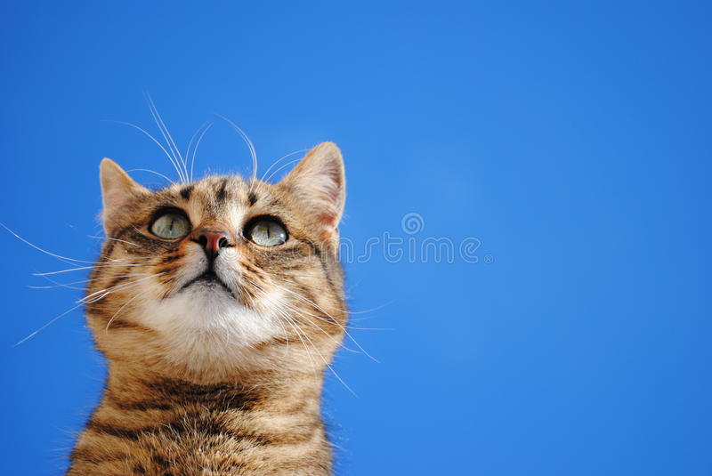 Cat pose. Animal feral cat pose and blue sky royalty free stock photo