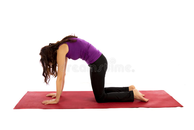 Cat Pose i yoga arkivbild