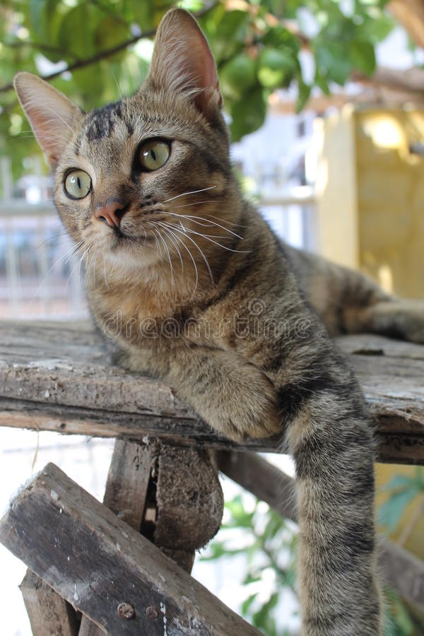 Cat on pose stock photos