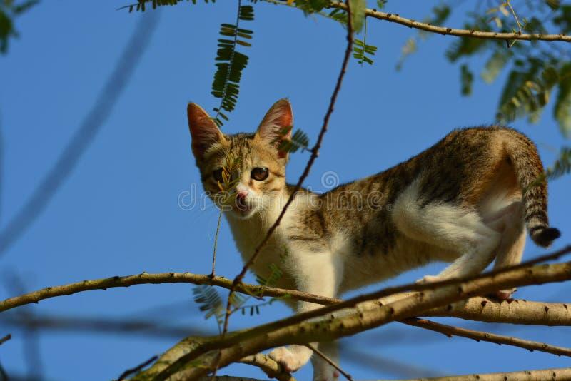 Cat. Poses like cheetha stock photos