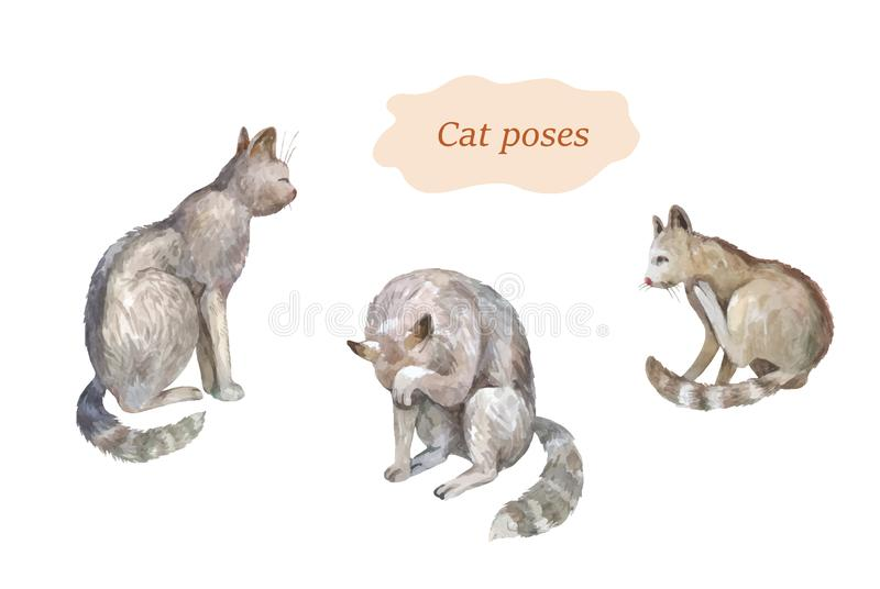 Cat poses set. Watercolor vector  hand drawn sketches stock images