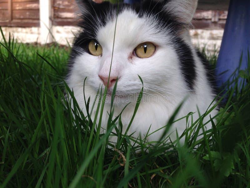 Cat Posing imagen de archivo