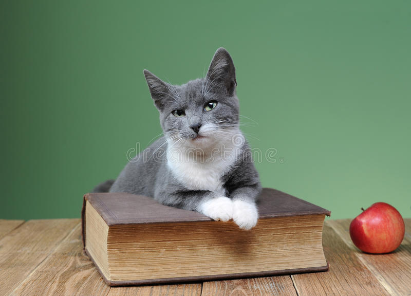 Cat posing for the book in the studio royalty free stock photo