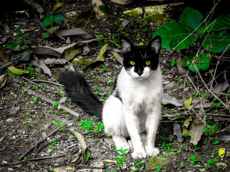 Cat Posing domestique sur l'arrière-cour photo libre de droits