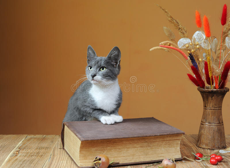 Cat posing next to books and flowers stock image
