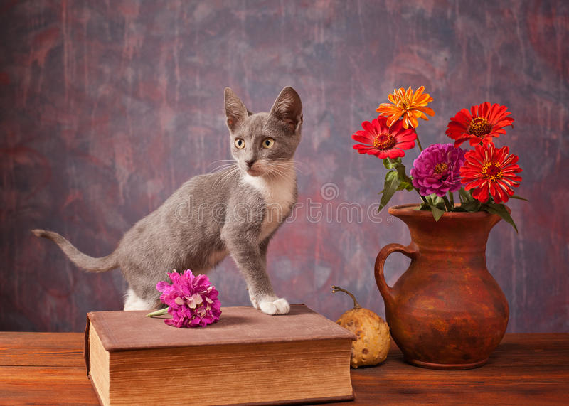 Cat posing next to flowers stock images