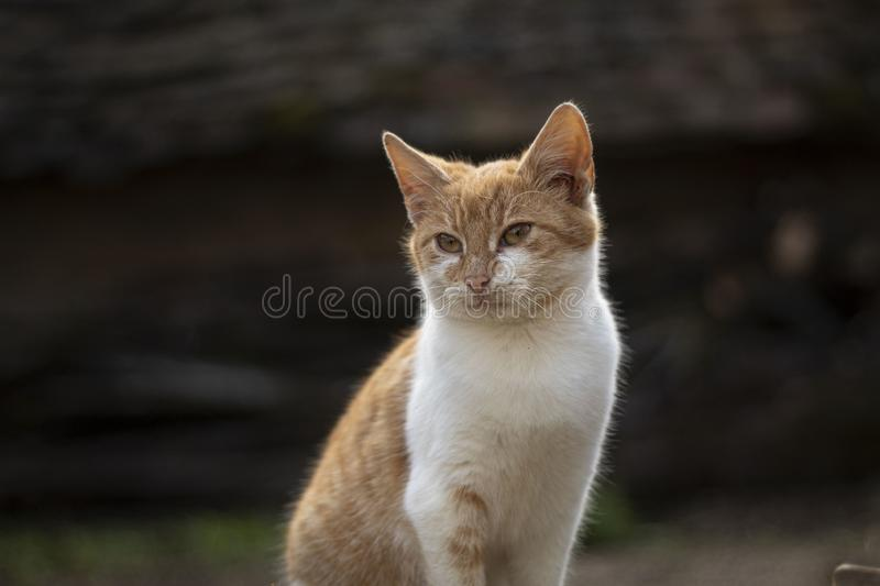 Cat posing in the yard royalty free stock photo