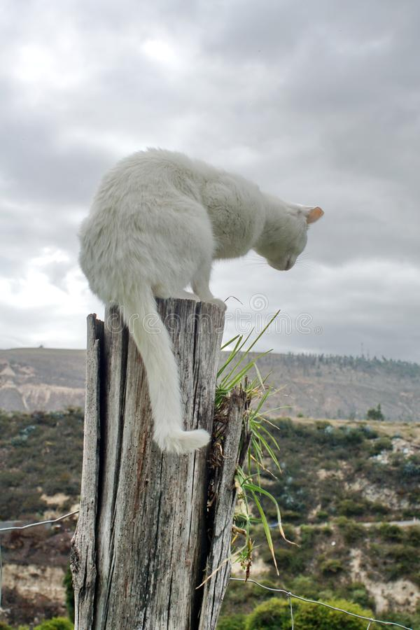 Cat on a post stock photography