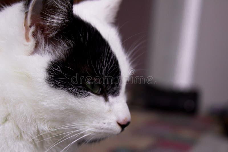 Cat Power stockbild