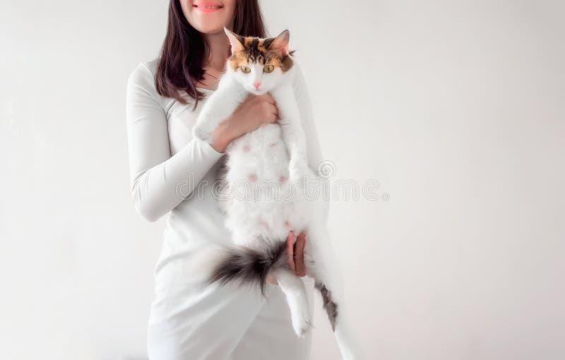 Cat Pregnancy Gato de calicó embarazada con el vientre grande que pone en las manos femeninas imagen de archivo libre de regalías