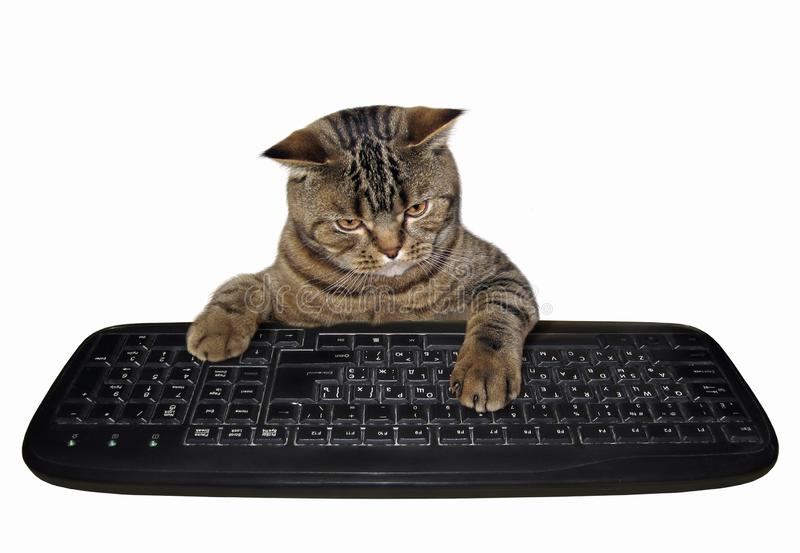 Cat with computer keyboard. The cat presses the keys of a computer keyboard. White background royalty free stock photo