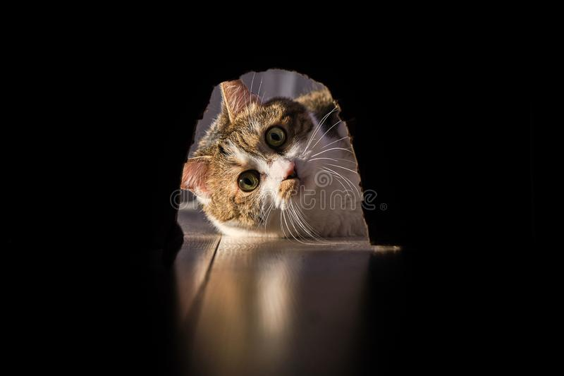The cat preys on the mouse. stock photography