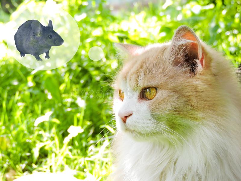 Cat, probably thinking about food, with a think cloud against a green background. Dreaming cat. Top view. Cute cat with yellow eyes. Cat waiting for some food royalty free stock photography