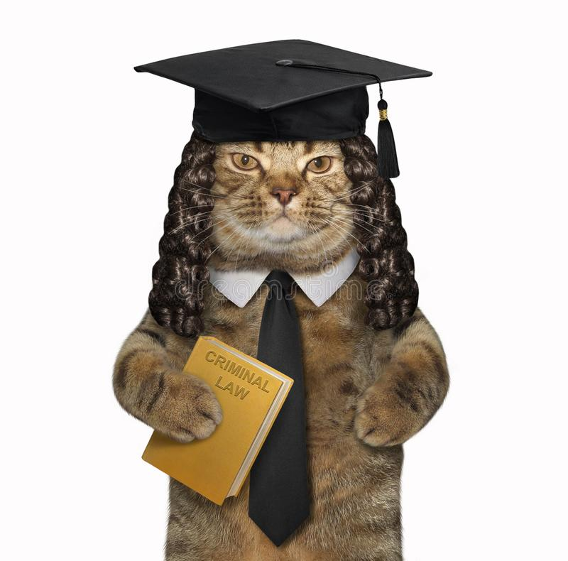 Cat professor holds a book royalty free stock image
