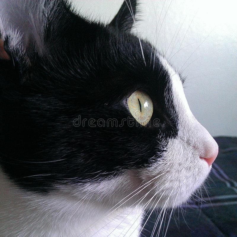 Cat Profile fotografia stock