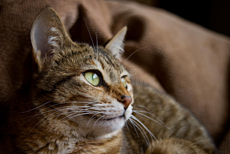 Cat Profile imagem de stock