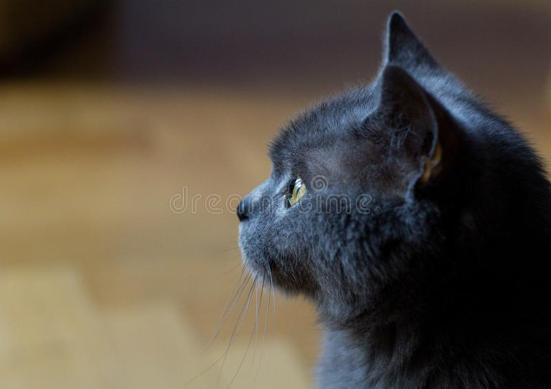 Cat Profile fotos de stock royalty free