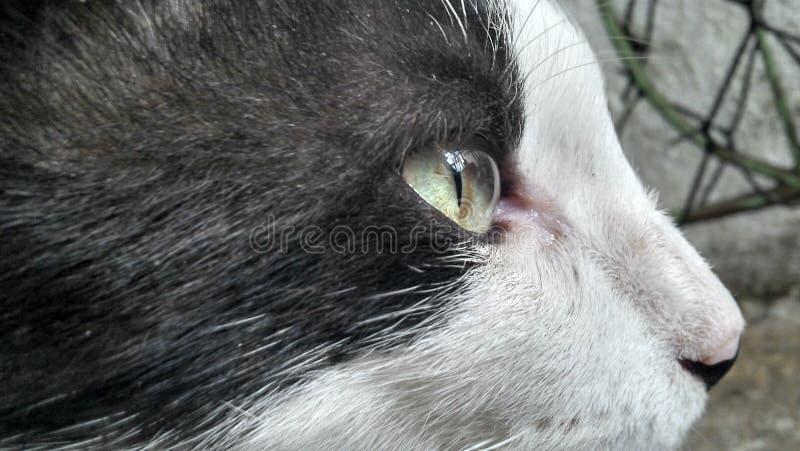 Cat Profile photographie stock libre de droits